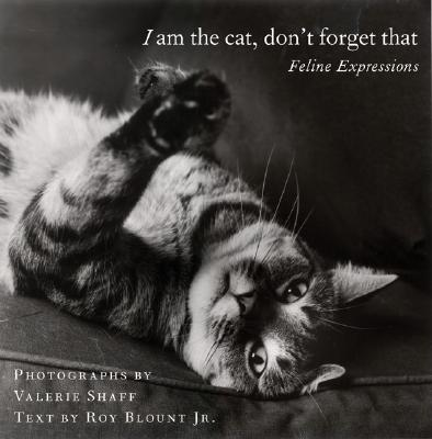 Image for I am the cat, don't forget that
