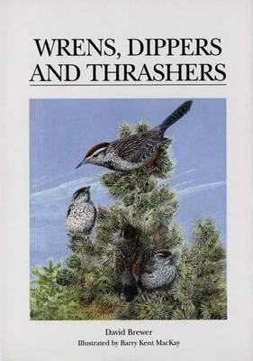 Wrens, Dippers and Thrashers, Brewer, David