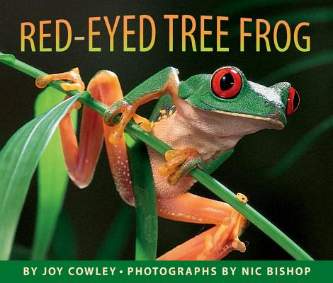 Red-eyed Tree Frog, Cowley, Joy