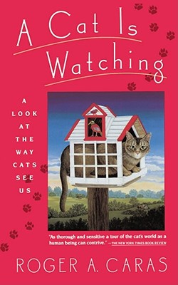 Image for CAT IS WATCHING