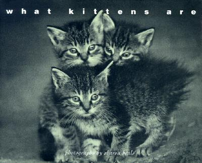 Image for What Kittens Are