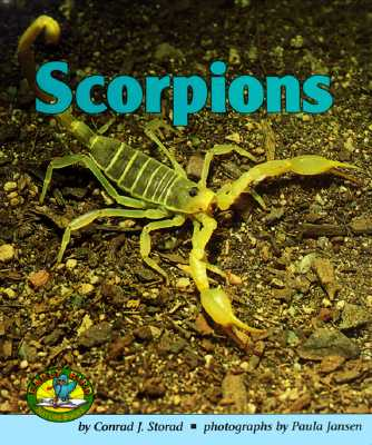 Image for Scorpions (Early Bird Nature Books)