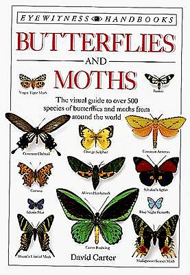 Image for Butterflies and Moths (Eyewitness Handbooks)