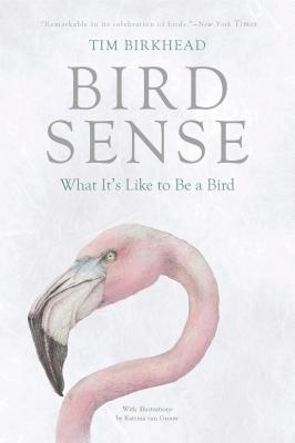 Image for Bird Sense: What It's Like to Be a Bird
