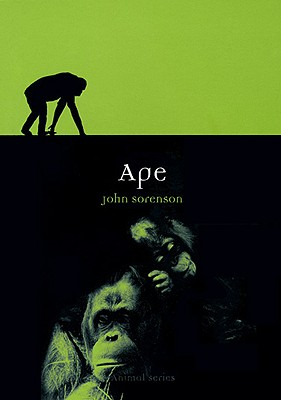 Image for Ape (Animal)