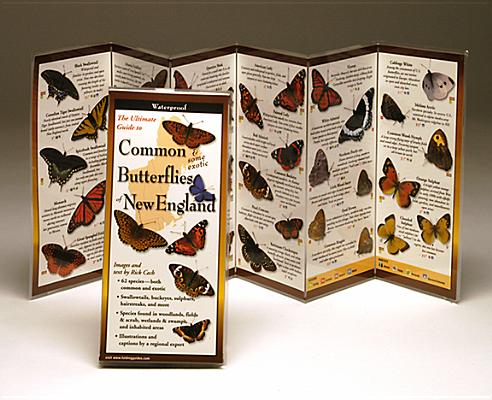 Common Butterflies of the Northeast (Foldingguides), Cech, Rick